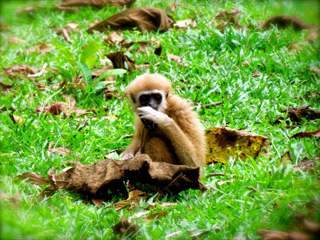 Monkey in Kha Sok National Park