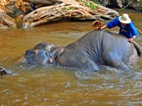 Your guide to the best elephant safaris in Thailand