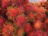 Tasting of Thailand's one hundred fruits