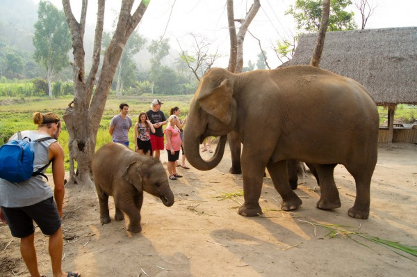 Chiang Mai Elephant Sanctuary Evoflash/Flickr